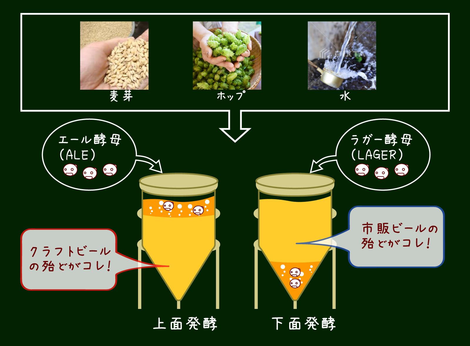 発酵のイメージ画像
